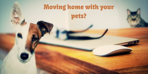 Moving home with your pets